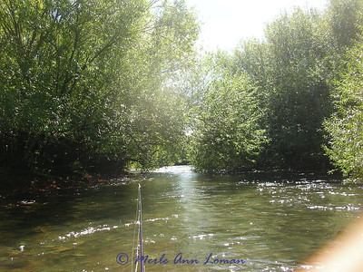 "A ""willow tunnel"" that the boat will go through. Another reason to hire a guide."