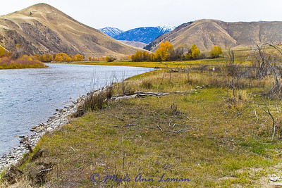 Dave caught his 30 inch steelhead up by the large yellow tree and the boat (look closely on the right bank). It took him all the way down here where I am shooting the photo.