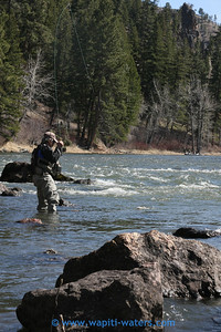 wade fishing, fish on in the Bitterroot
