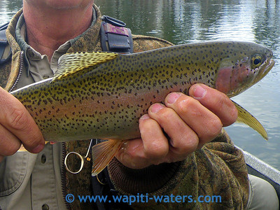 Jack Mauer holding his trout caught on the Bitterroot