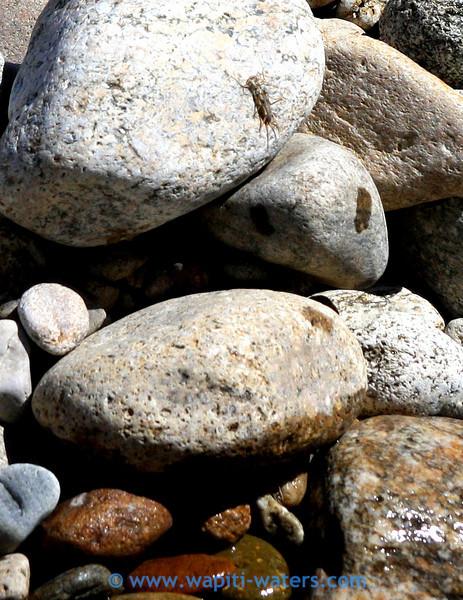 Skwala on the rocks