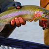 cutthroat trout fascination