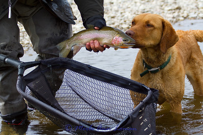 Freda checking out another cutthroat trout I caught