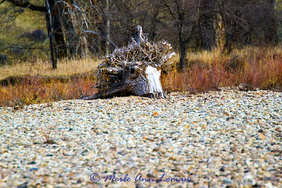interesting driftwood on the bank