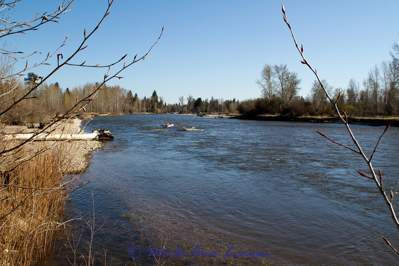 Taken at Tucker Crossing on the Bitterroot River May 11, 2011. Looking north down-river.