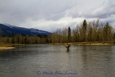 This photo was actually taken April 28 north of Stevensville FAS, Montana.