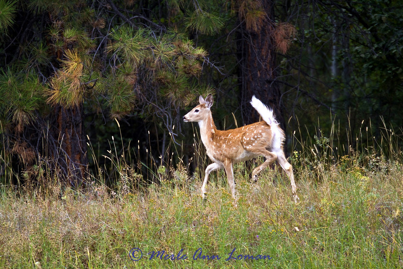 One of the fawns we saw this day.