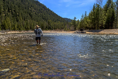 Jack landing a cutthroat trout on the West Fork of the Bitterroot River in April