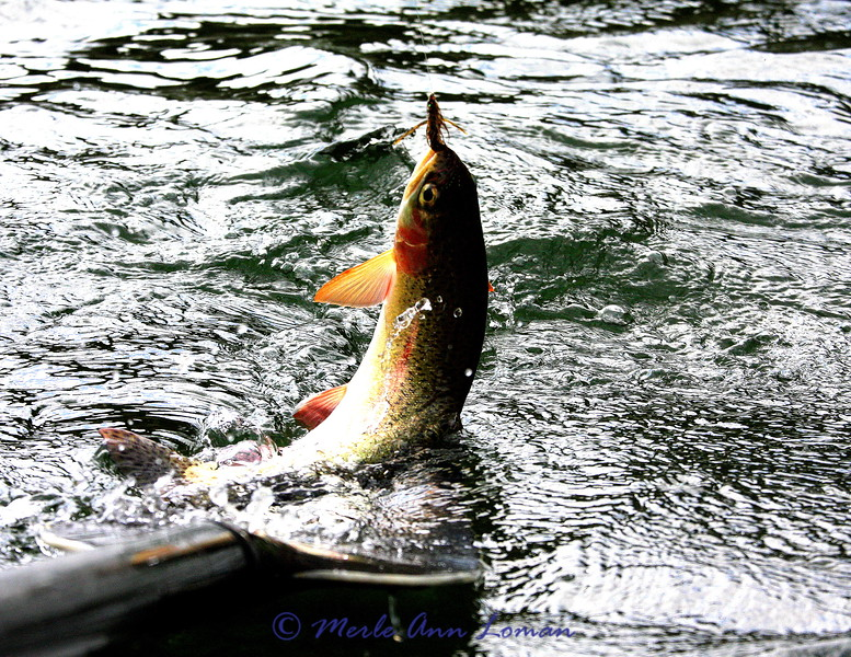 Nice colors on this trout