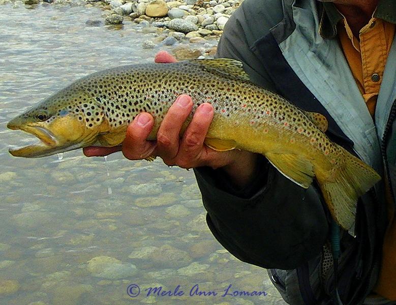 Jack's trout