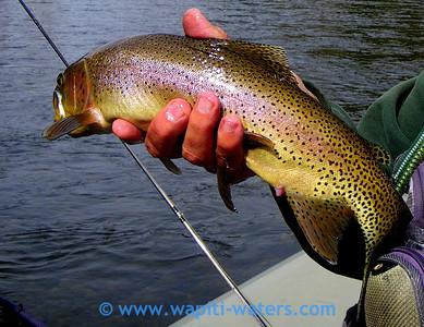 Jack's trout - Bitterroot River