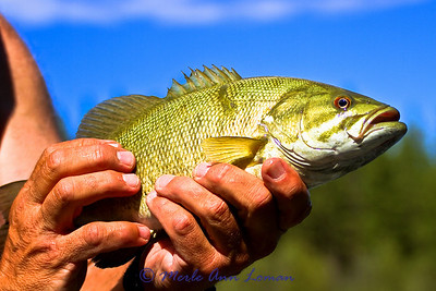Nice smallmouth bass