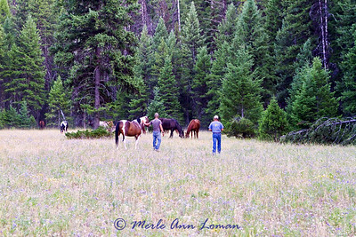 Checking on the horses - 9 pm