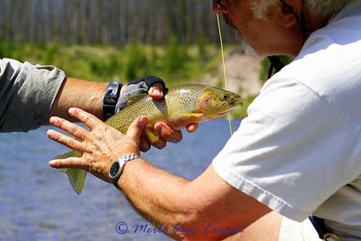 Same cutthroat and good idea of the size of it.