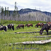 We had lunch here so that the horses could enjoy the green timothy grass