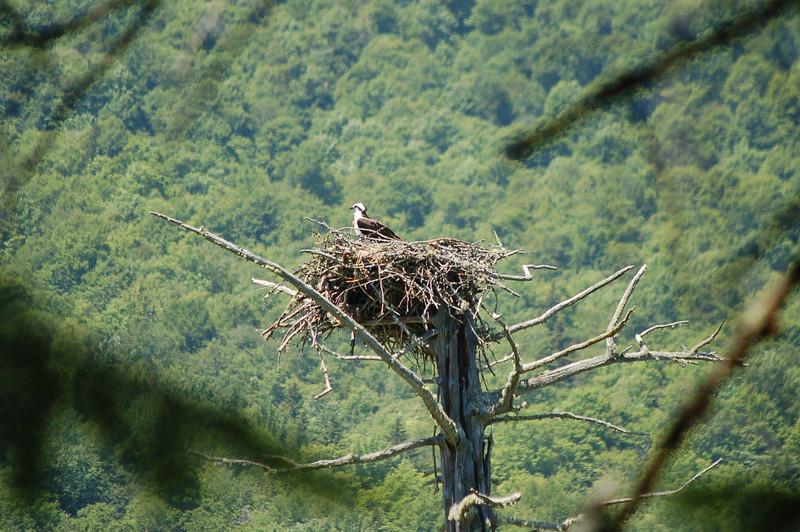 65  Osprey, Second College Grant, New Hampshire