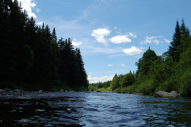 A Stonefly's View of the Swift Diamond River