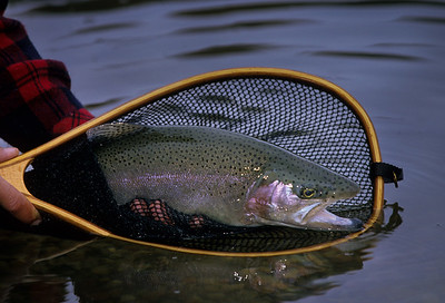 Fly Fishing-Colorado-107
