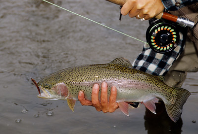 Fly Fishing-Colorado-126