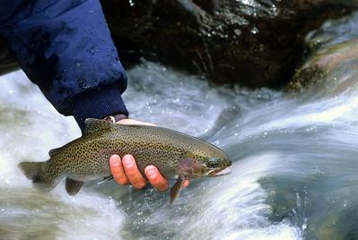 FF Roaring Fork River-105