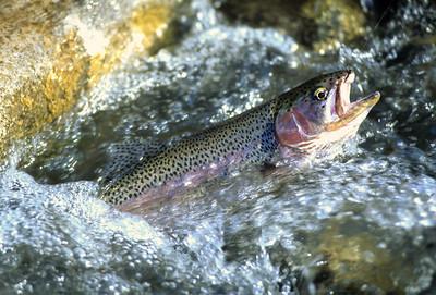 FF Roaring Fork River-104