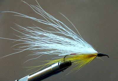 5.White & Yellow streamer, jan 22, 2020.DSCN9984