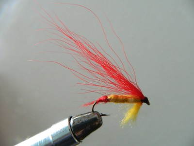 Red Hairwing, jan 30, 2020.DSCN0011