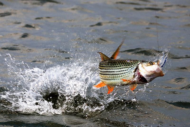 ZAMBIA / Lower Zambezi River