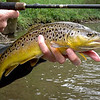 A lovely brown trout on Tenkara ~ what a great way to fish!