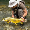 A huge trophy brown trout from a small Slovenien river..