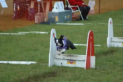 Albury Non Croydon Dogs30