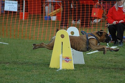 Albury Non Croydon Dogs44
