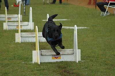 Albury Non Croydon Dogs18