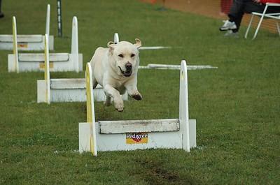 Albury Non Croydon Dogs26