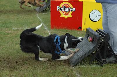 Albury Non Croydon Dogs42