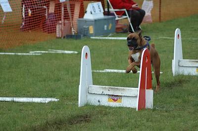Albury Non Croydon Dogs31