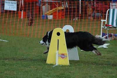 Albury Non Croydon Dogs46