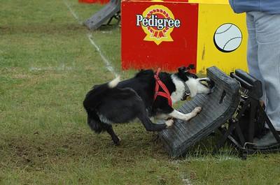 Albury Non Croydon Dogs38