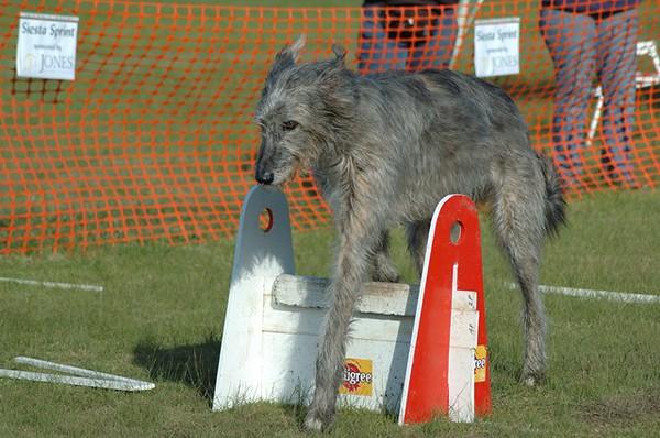 Albury Non Croydon Dogs103