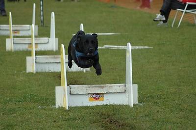Albury Non Croydon Dogs22