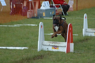 Albury Non Croydon Dogs27