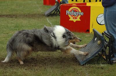Albury Non Croydon Dogs52
