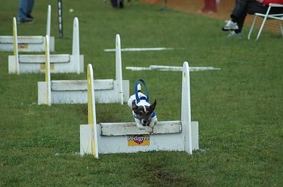 Albury Non Croydon Dogs20
