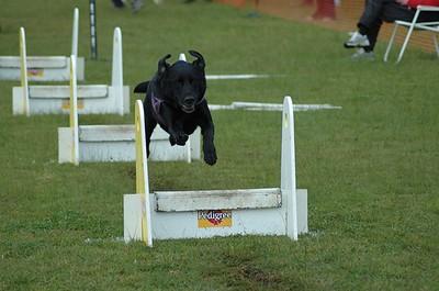 Albury Non Croydon Dogs21