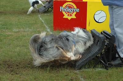 Albury Non Croydon Dogs36
