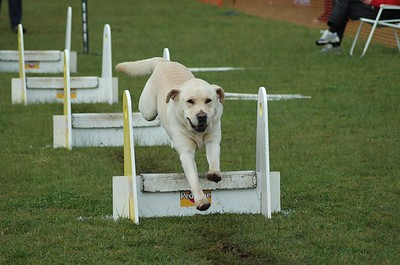 Albury Non Croydon Dogs23