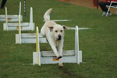 Albury Non Croydon Dogs10