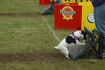 Albury Non Croydon Dogs51