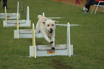Albury Non Croydon Dogs19