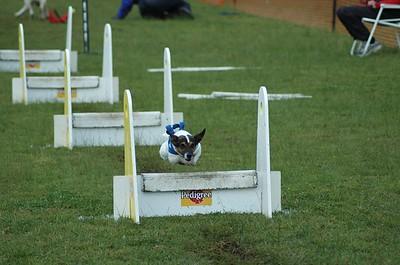 Albury Non Croydon Dogs16